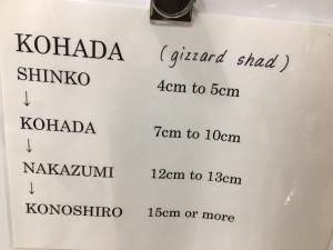 Kohada Size