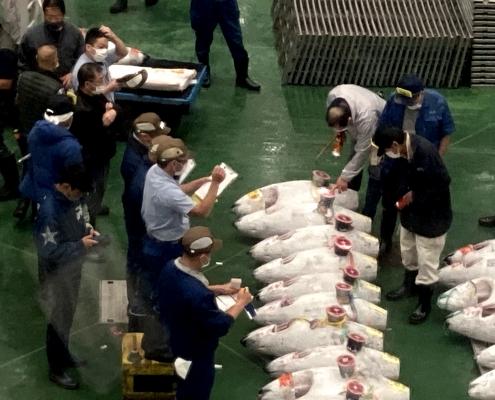 Tuna Auction in Toyosu Market
