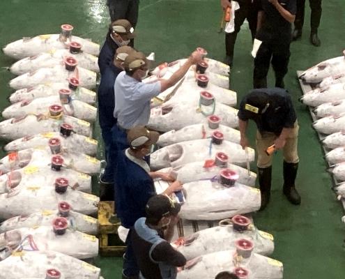 Toyosu Tuna Auction 2020