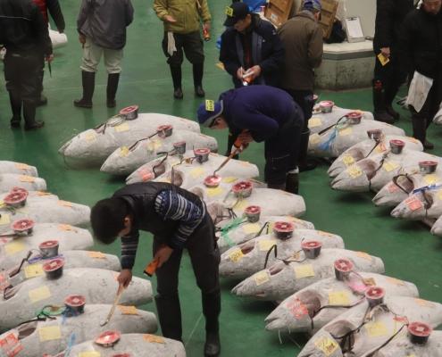 Tuna Auction in Toyosu