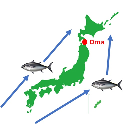 Bluefin Tuna Oma Aomori
