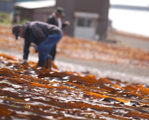 Dry Kombu Kelp